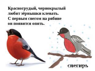 Красногрудый, чернокрылыйлюбит зёрнышки клевать.С первым снегом на рябинеон появ
