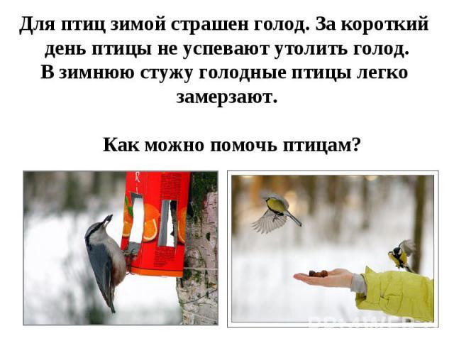 Для птиц зимой страшен голод. За короткий день птицы не успевают утолить голод.В зимнюю стужу голодные птицы легко замерзают.Как можно помочь птицам?