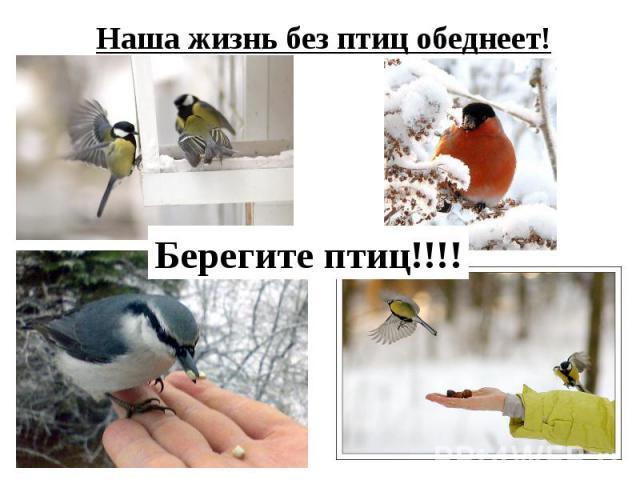 Наша жизнь без птиц обеднеет!Берегите птиц!!!!