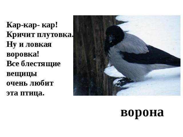Кар-кар- кар!Кричит плутовка.Ну и ловкая воровка!Все блестящие вещицыочень любит эта птица.ворона