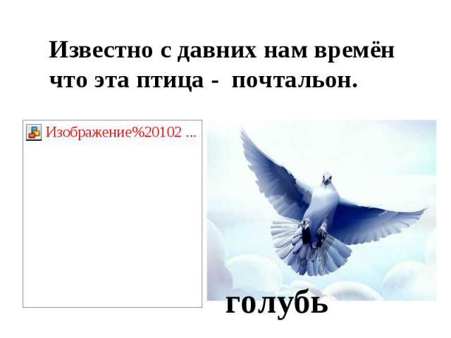 Известно с давних нам времёнчто эта птица - почтальон.голубь