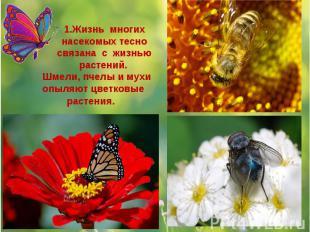 1.Жизнь многих насекомых тесно связана с жизнью растений. Шмели, пчелы и мухи оп