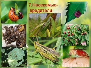 7.Насекомые- вредители