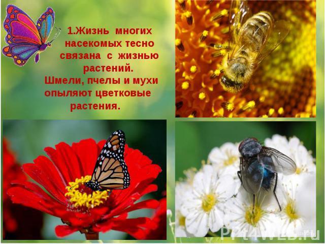1.Жизнь многих насекомых тесно связана с жизнью растений. Шмели, пчелы и мухи опыляют цветковые растения.