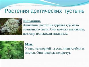 Растения арктических пустыньЛишайник.Лишайник растёт на деревья где мало солнечн