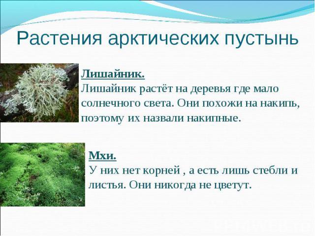 Растения арктических пустыньЛишайник.Лишайник растёт на деревья где мало солнечного света. Они похожи на накипь, поэтому их назвали накипные. Мхи.У них нет корней , а есть лишь стебли и листья. Они никогда не цветут.