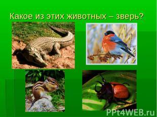 Какое из этих животных – зверь?