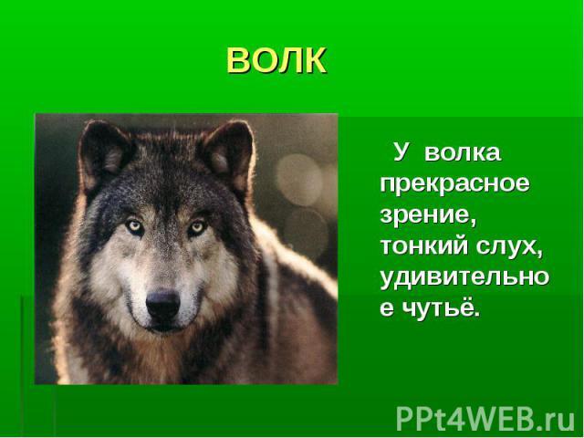 ВОЛК У волка прекрасное зрение, тонкий слух, удивительное чутьё.