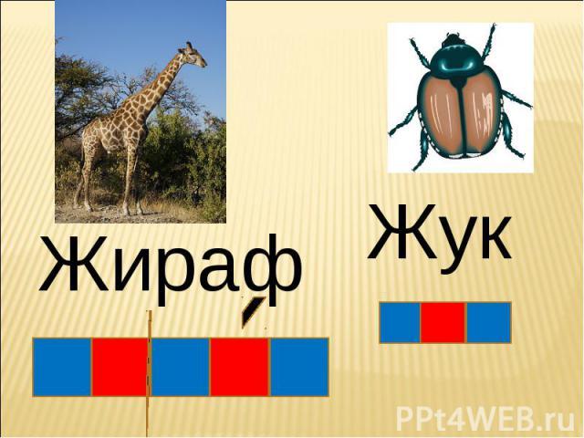 Жираф Жук