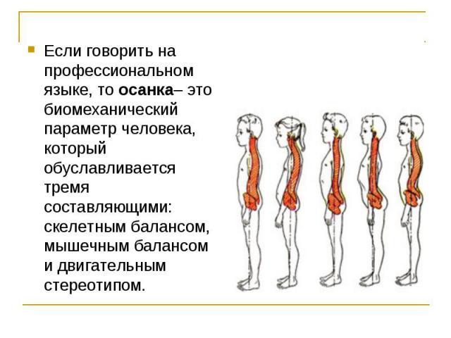 Если говорить на профессиональном языке, то осанка– это биомеханический параметр человека, который обуславливается тремя составляющими: скелетным балансом, мышечным балансом и двигательным стереотипом.