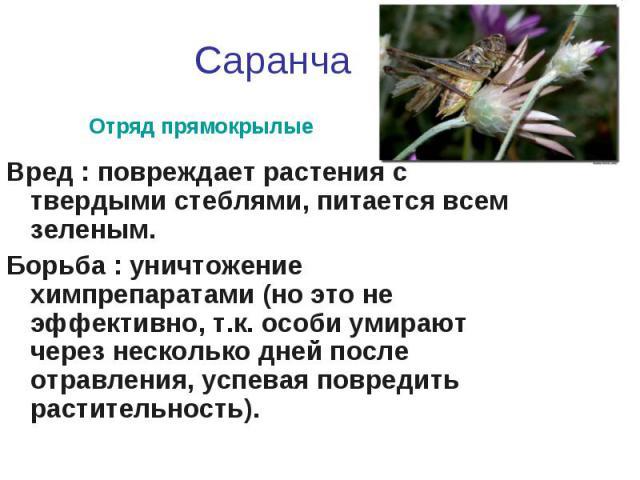 СаранчаВред : повреждает растения с твердыми стеблями, питается всем зеленым.Борьба : уничтожение химпрепаратами (но это не эффективно, т.к. особи умирают через несколько дней после отравления, успевая повредить растительность).