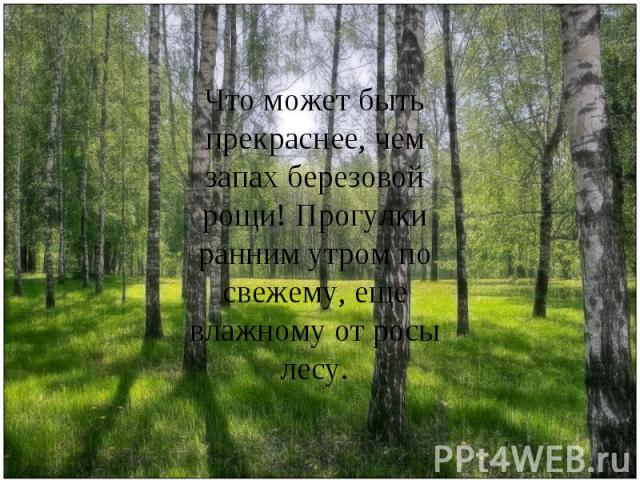 Что может быть прекраснее, чем запах березовой рощи! Прогулки ранним утром по свежему, еще влажному от росы лесу.