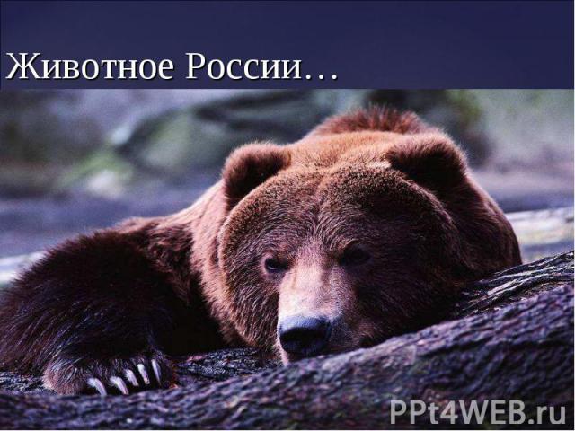 Животное России…