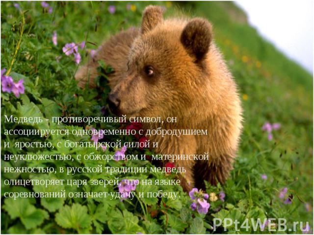 Медведь - противоречивый символ, он ассоциируется одновременно с добродушием и яростью, с богатырской силой и неуклюжестью, с обжорством и материнской нежностью, в русской традиции медведь олицетворяет царя зверей, что на языке соревнований означает…