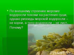 По внешнему строению морские водоросли похожи на растения суши, однако ризоиды м