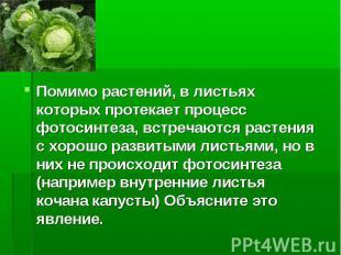 Помимо растений, в листьях которых протекает процесс фотосинтеза, встречаются ра