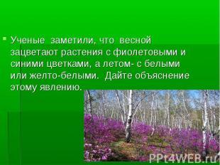 Ученые заметили, что весной зацветают растения с фиолетовыми и синими цветками,