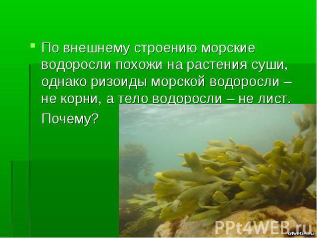 По внешнему строению морские водоросли похожи на растения суши, однако ризоиды морской водоросли – не корни, а тело водоросли – не лист. Почему?
