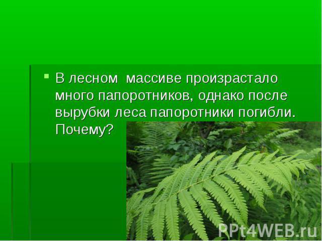 В лесном массиве произрастало много папоротников, однако после вырубки леса папоротники погибли. Почему?