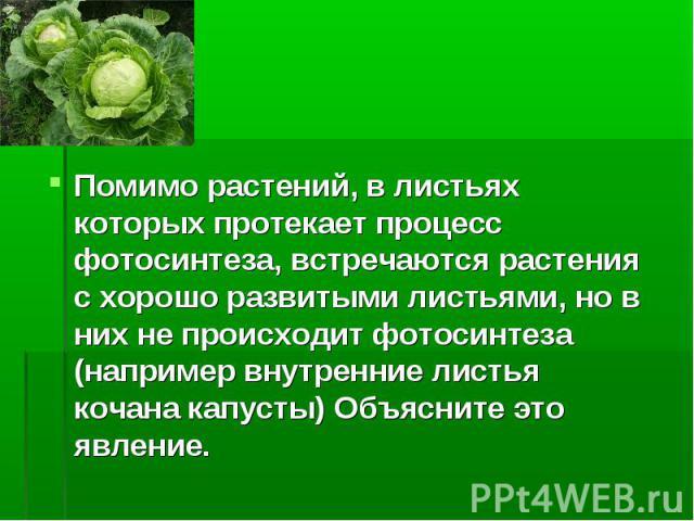 Помимо растений, в листьях которых протекает процесс фотосинтеза, встречаются растения с хорошо развитыми листьями, но в них не происходит фотосинтеза (например внутренние листья кочана капусты) Объясните это явление.