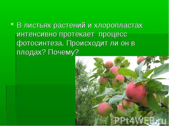 В листьях растений и хлоропластах интенсивно протекает процесс фотосинтеза. Происходит ли он в плодах? Почему?