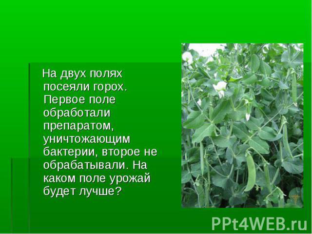 На двух полях посеяли горох. Первое поле обработали препаратом, уничтожающим бактерии, второе не обрабатывали. На каком поле урожай будет лучше?