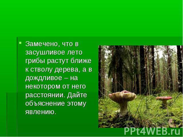 Замечено, что в засушливое лето грибы растут ближе к стволу дерева, а в дождливое – на некотором от него расстоянии. Дайте объяснение этому явлению.