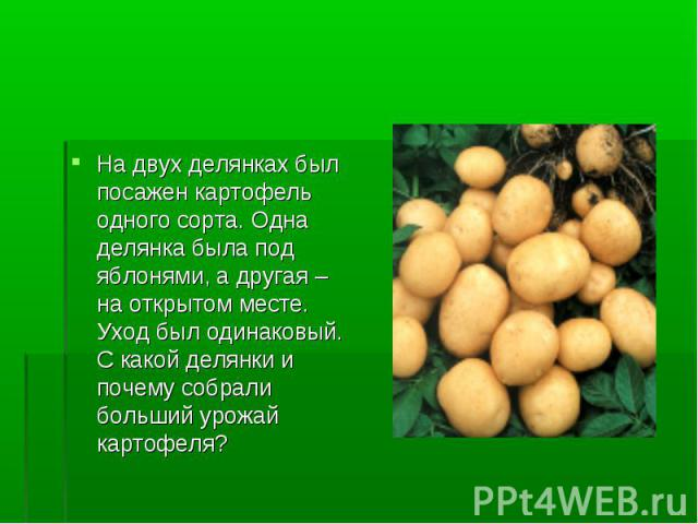 На двух делянках был посажен картофель одного сорта. Одна делянка была под яблонями, а другая – на открытом месте. Уход был одинаковый. С какой делянки и почему собрали больший урожай картофеля?