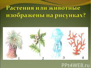 Растения или животные изображены на рисунках?
