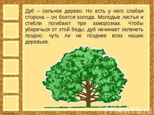 Дуб – сильное дерево. Но есть у него слабая сторона – он боится холода. Молодые