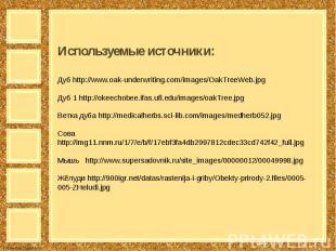 Используемые источники:Дуб http://www.oak-underwriting.com/images/OakTreeWeb.jpg