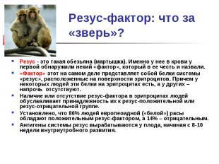 Резус-фактор: что за «зверь»?Резус - это такая обезьяна (мартышка). Именно у нее