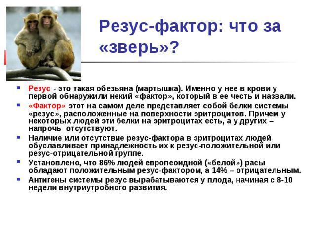 Резус-фактор: что за «зверь»?Резус - это такая обезьяна (мартышка). Именно у нее в крови у первой обнаружили некий «фактор», который в ее честь и назвали.«Фактор» этот на самом деле представляет собой белки системы «резус», расположенные на поверхно…
