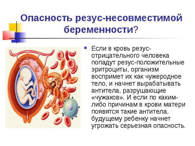 Опасность резус-несовместимой беременности?Если в кровь резус-отрицательного человека попадут резус-положительные эритроциты, организм воспримет их как чужеродное тело, и начнет вырабатывать антитела, разрушающие «чужаков». И если по каким-либо прич…