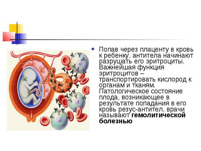 Попав через плаценту в кровь к ребенку, антитела начинают разрушать его эритроциты. Важнейшая функция эритроцитов – транспортировать кислород к органам и тканям. Патологическое состояние плода, возникающее в результате попадания в его кровь резус-ан…