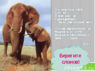 Слон ведь больше, чем животное.Он воин и охотник,Трудяга, работяга,К тому ж, он