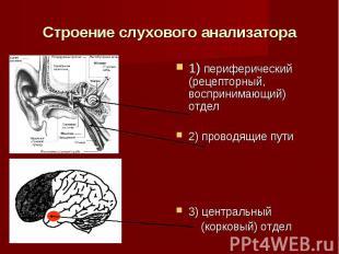 Строение слухового анализатора1) периферический (рецепторный, воспринимающий) от