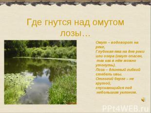 Где гнутся над омутом лозы…Омут – водоворот на реке,Глубокая яма на дне рекиили