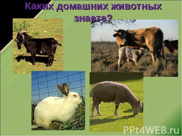 Каких домашних животных знаете?