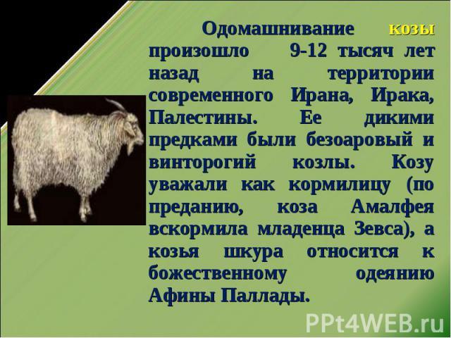 Одомашнивание козы произошло 9-12 тысяч лет назад на территории современного Ирана, Ирака, Палестины. Ее дикими предками были безоаровый и винторогий козлы. Козу уважали как кормилицу (по преданию, коза Амалфея вскормила младенца Зевса), а козья шку…