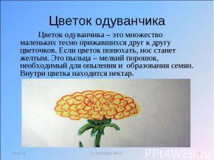 Цветок одуванчика Цветок одуванчика – это множество маленьких тесно прижавшихся