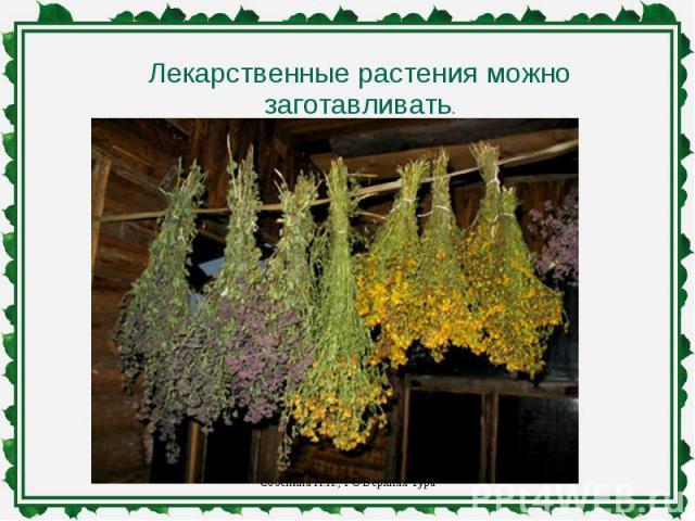Лекарственные растения можно заготавливать.