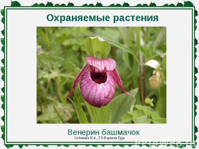 Охраняемые растения