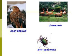 орел-беркутфламингожук- красотел