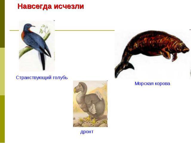 Навсегда исчезлиСтранствующий голубьМорская коровадронт