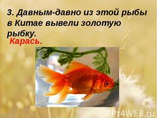 3. Давным-давно из этой рыбы в Китае вывели золотую рыбку.