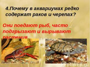 4.Почему в аквариумах редко содержат раков и черепах?Они поедают рыб, часто подг