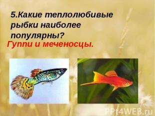 5.Какие теплолюбивые рыбки наиболее популярны?Гуппи и меченосцы.