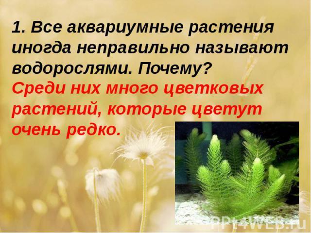1. Все аквариумные растения иногда неправильно называют водорослями. Почему? Среди них много цветковых растений, которые цветут очень редко.