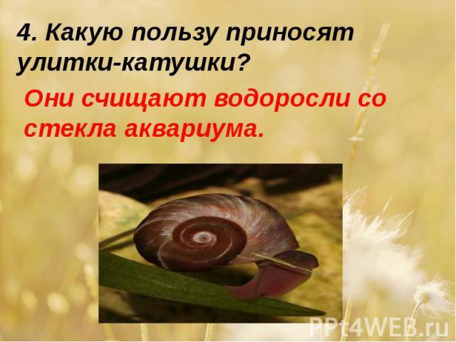 4. Какую пользу приносят улитки-катушки?Они счищают водоросли со стекла аквариума.